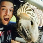 Turista alemão faz sucesso após postar selfie com zebra http://t.co/BFD1Y9WWjF #G1 http://t.co/7SSKmvuMea