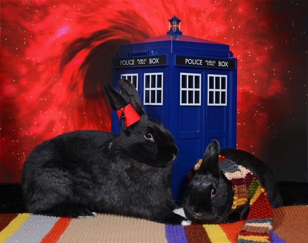 At last, the Dr Who themed picture of my rabbits you've been waiting for--this time taken by a pro @RedDoorShelter http://t.co/tJVIu5MU34