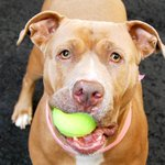 I JUST WANT TO BE HAPPY AGAIN. PLS DONT LET THEM KILL ME TODAY QUARTZ 3YRS #NYC DEATHROW http://t.co/t0B8QwZz6S … http://t.co/gx1kyysBNx