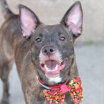 I HAVE SO MUCH MORE TO LIVE.. PLS DONT LET THEM KILL ME TODAY APRIL 2YRS #NYC DEATHROW 4/28 http://t.co/VyNAkHrNit … http://t.co/ramvF08A0D