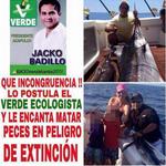 Exhiben a Candidato del Verde en Acapulco pescando especies en peligro de extinción http://t.co/Swipph0XZQ http://t.co/gPJID63zfD #EsDeRatas