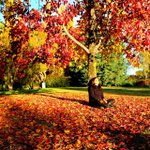 See our amazing autumn as photographed by our fans! https://t.co/novO47WQTq' Photo: @vishalcanberra #visitcanberra http://t.co/2I766buJcY