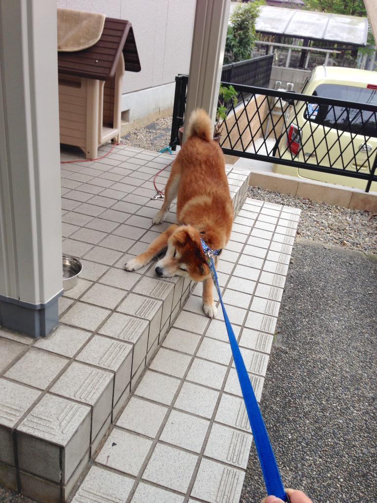 散歩に行きたくない犬がかわいすぎるvvvvvvvvと話題