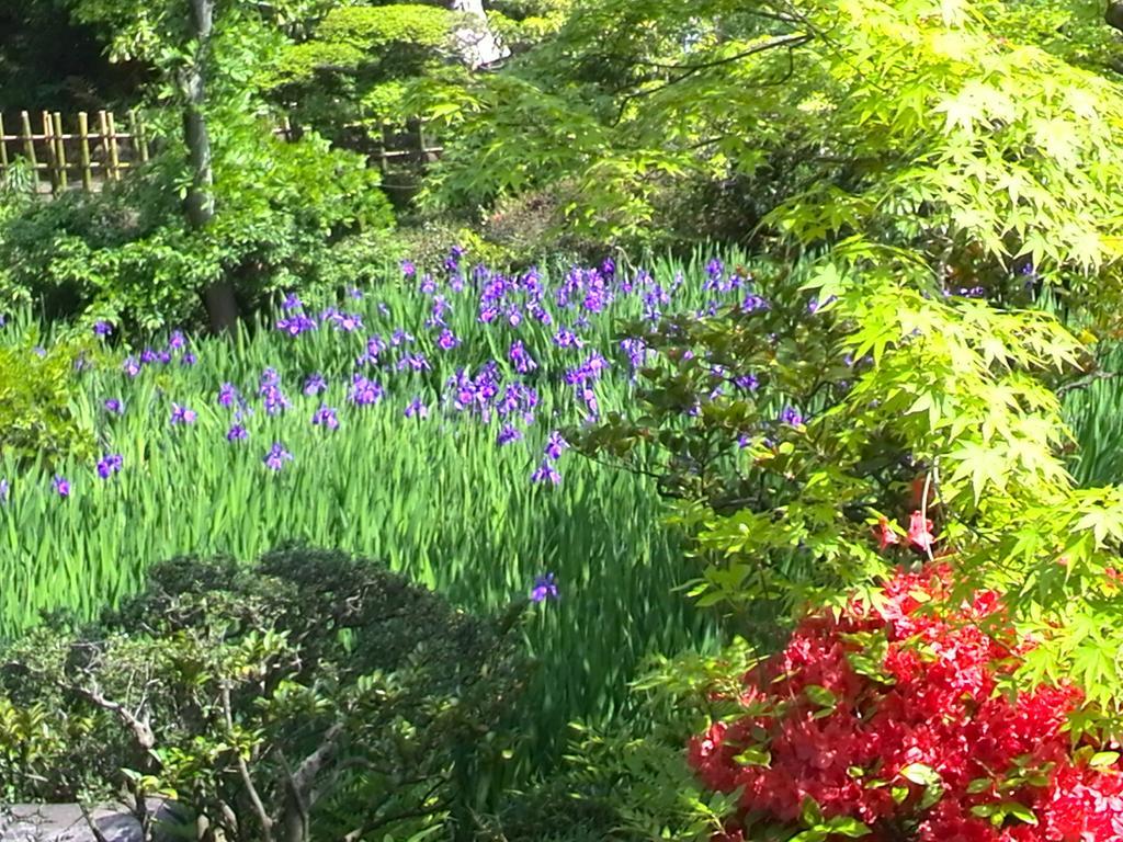 根津美術館のお庭のかきつばたが綺麗でした。新緑も気持ちよかったですよ。そこここにある石仏がなんとも言えない表情で好き。#irise  #nezumuseum http://t.co/X6eJs6RBXC