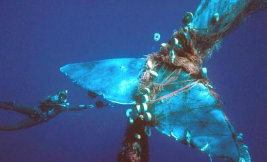 100 million sharks  100,000 albatrosses  300,000 whales & dolphins  Killed annually as bycatch http://t.co/Uc5MHeJUgl http://t.co/0nW9K89PrZ