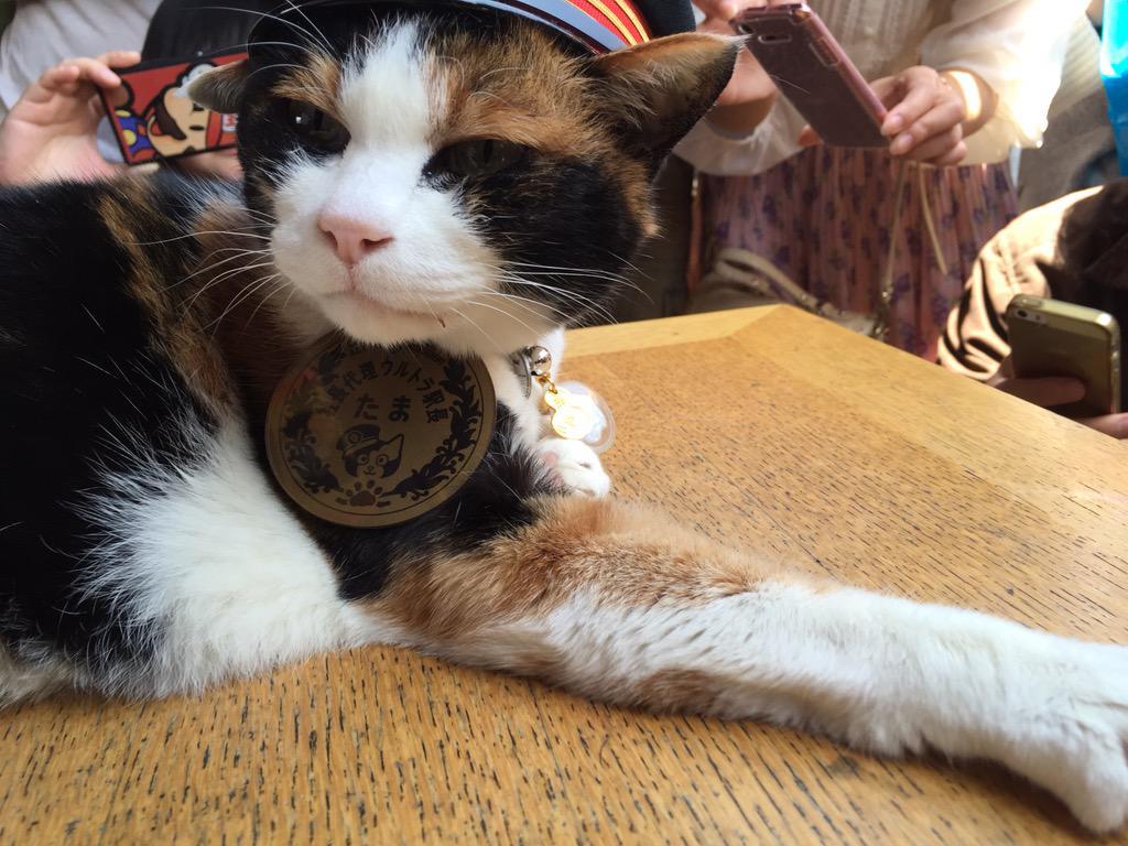 にゃんご!おはようございます。 ワタクシ、本日16歳になります。 お誕生日催事は、12時15分から、貴志駅にて、開催いたします。皆様、お立ち寄りくださいませにゃんご! http://t.co/s2CO9TxqZi