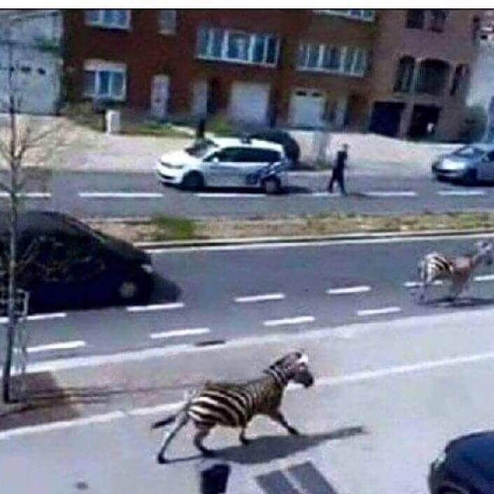 The rioters in Baltimore let the zoo animals free. #BaltimoreRiots #jumanji http://t.co/UoScJFHzJ1