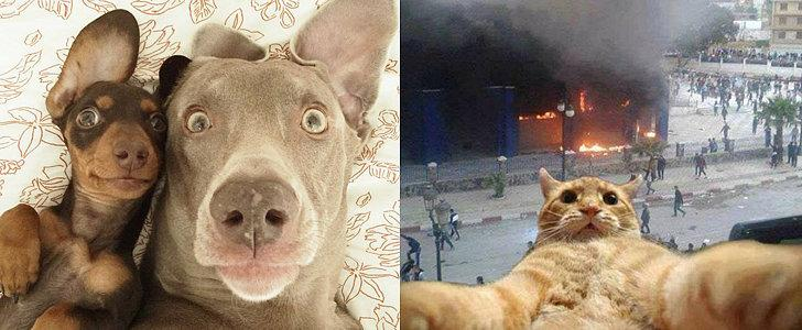 The Best Animal Selfies Of All Time No Lie Scoopnestcom - The 21 best animal selfies of all time