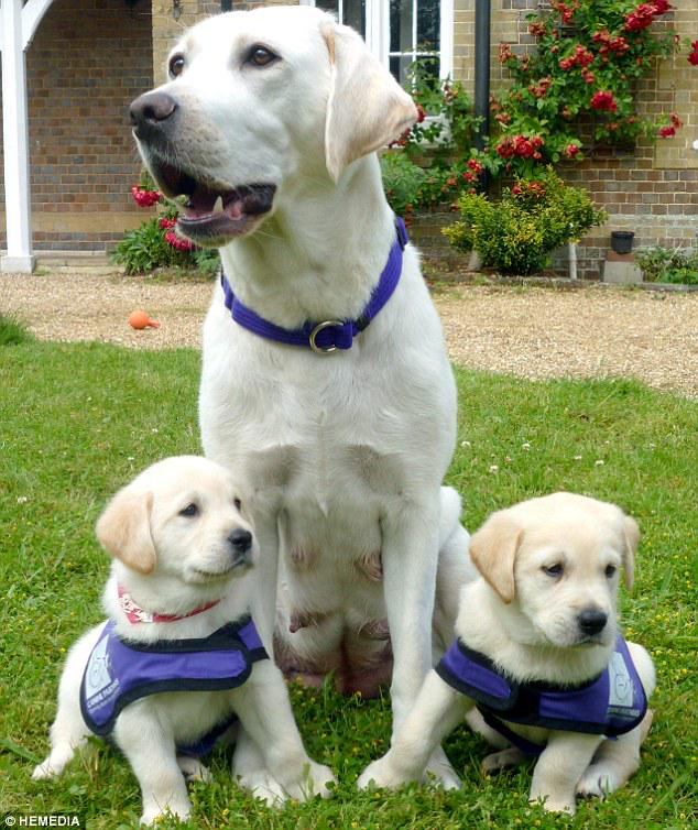The guide dogs and puppies are here at DUSA The Union tomorrow, 11am-2pm #examstressrelief http://t.co/A9Is0dGVQJ