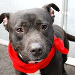 I´M HEARTBROKEN, LONELY AND SO SCARED.. PLS DONT LET ME DIE TOMORROW JUSTIN 1YR #NYC DEATHROW http://t.co/HitGe61twz http://t.co/gAMIjG4mTY