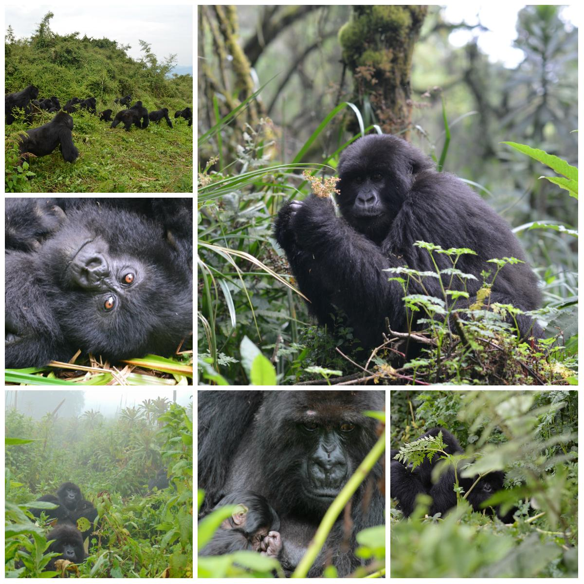 Happy #EndangeredSpeciesDay! We hope you will think about #gorillas & all endangered species today. http://t.co/Zlde1DNK1d
