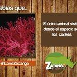 Visita @zoozacango #SabíasQue http://t.co/FM13K1iatM @Manzur_Jose