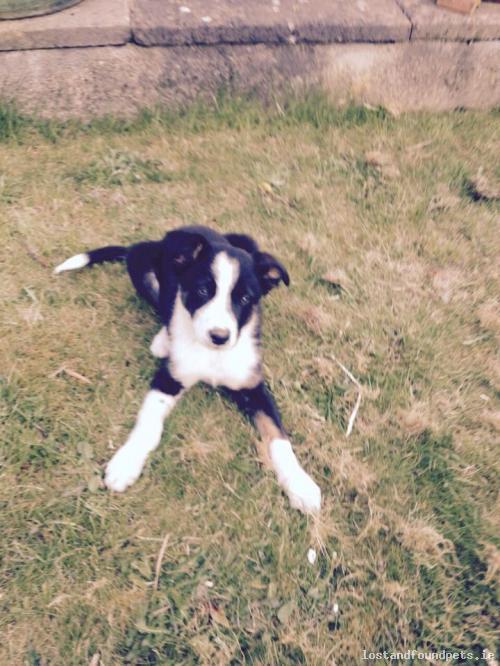 A male dog was lost on 07/05/2015 in Rathdown Park, #Terenure http://t.co/099bB2A9Q2 #lpie http://t.co/X66kSz3Jm2