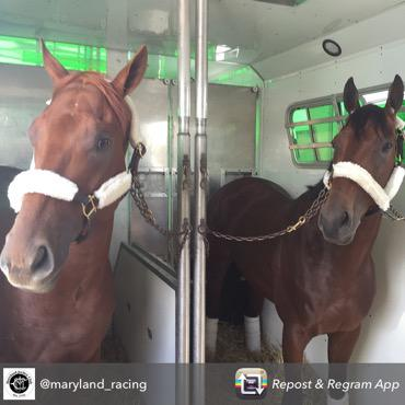 Dortmund and American Pharoah have arrived in Baltimore #Preakness http://t.co/glRp258Sgy