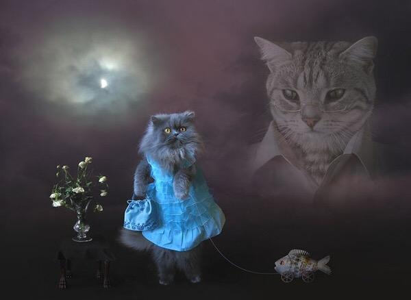 I googled 'the best picture on the internet' http://t.co/eHMkYiV39G