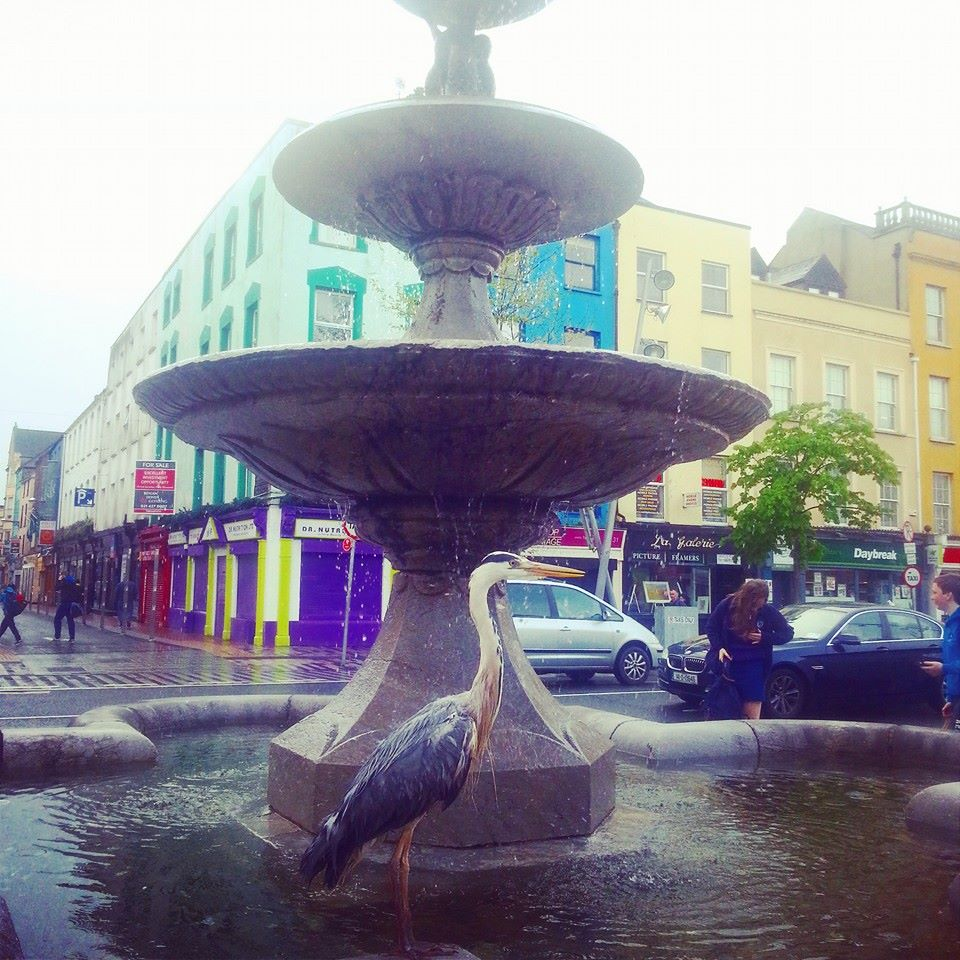 Look who was hanging out at the #GrandParade fountain in #Cork this morning! http://t.co/ISVYqRpT1o