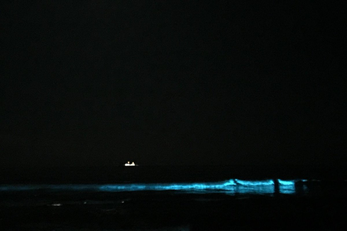 海すんごい光ってた〜!! #夜光虫 #赤潮 http://t.co/skZLqvXiLh