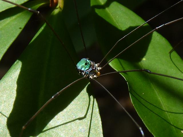 緑に輝くザトウムシさん。この色は珍しいと思う。個人的感想ですけど。恩納村熱田。 http://t.co/N2M4RXElrN