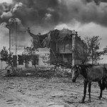 Арьс яс болтолоо турсан Монгол морь Берлиний нэгэн барилгын хажууд. Монгол ЗХУ-ын хамгийн том ханган нийлүүлэгч байв. http://t.co/b5zGUk0Ulu