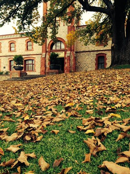 Not sure our gardeners enjoy this time of the year, but it's a great time to visit! #wine #autumn #barossa #leaves http://t.co/leLPd0ZSSy