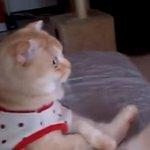 猫が座ってテレビを観ている(画像) http://t.co/mGYCF7jC5s http://t.co/sArig7nAf1
