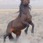 Монгол адуу... http://t.co/rlxU50IU2s