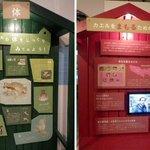 井の頭自然文化園の特設展「カエル学にゅうもん」。カエルの秘密に迫ります。井の頭での会期は2015年5月6日まで! 今後、葛西臨海水族園→多摩動物公園→上野動物園と巡回します。詳しくは☞http://t.co/FJOniyrNao http://t.co/rvIT1tvM00