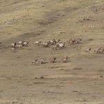 Хустайн нуруу монголын хамгийн олон бугатай болсон гэнэ.ойролцоогоор 1000 гаран… http://t.co/U1mhjYqsAj