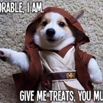 MAY the FOURTH be with you! #AKC #WOOFtale #MayThe4thBeWithYou http://t.co/IlYgpdzce7
