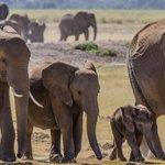 Le zèbre, le tapir, lhippopotame, le chameau sont menacés dextinction http://t.co/V9PqaPPmd9 http://t.co/JXsHFR94Mr