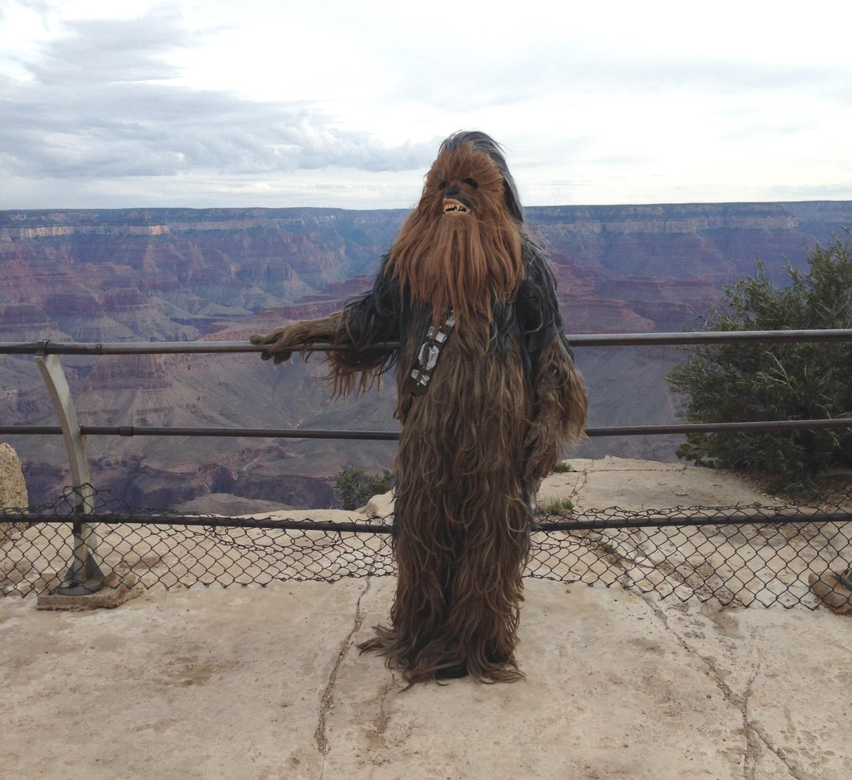 Dear Han, I'm at Grand Canyon Anakin see for miles and miles. Ha! Get it? #MayThe4thBeWithYou -ecd/if http://t.co/J2aPaTPfTf