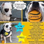 PLEASE adopt Carmelo! His adoption fees have been waived at @oaklandsanimals. He just needs ❤ and a ????!!! #Oakland http://t.co/HaEpOHdxug