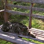 Mr. Pickles is taking it easy http://t.co/qO8LrniDtE