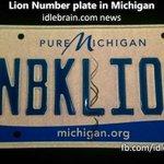 RT @idlebraindotcom: Lion Number plate in Michigan http://t.co/hi72Uvc4gy