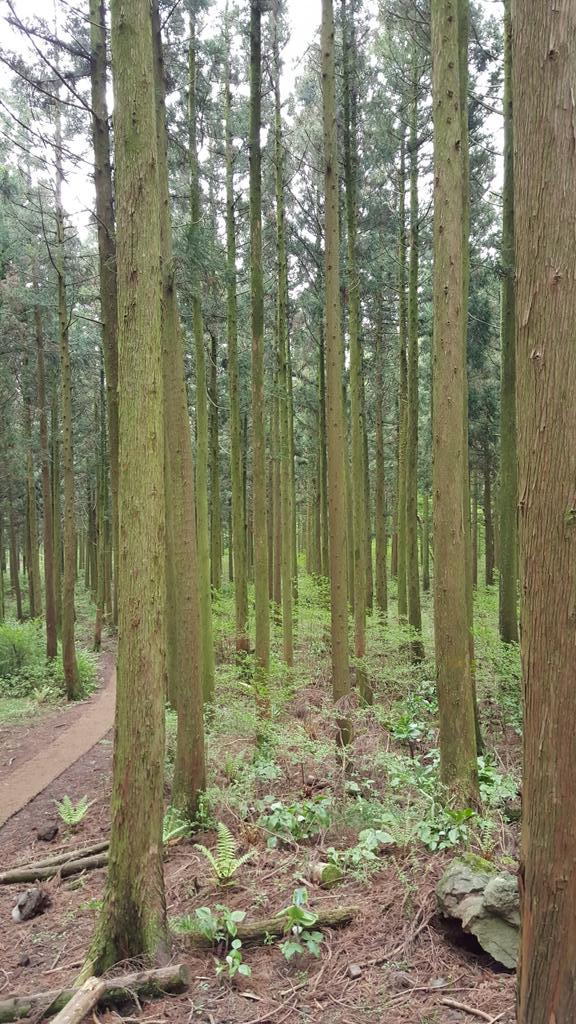 제주 시외버스터미널 6번 홈 780번 타고 한라생태숲에서 절물자연휴양림까지 약 8km 걷고 43번 타고 동문로터리로 복귀하는 여정 이틀 반복. 바다고 뭐고 다 필요없고 숲이 너무 좋다는 부모님 뜻을 받자와... http://t.co/kpDfTKQwpS