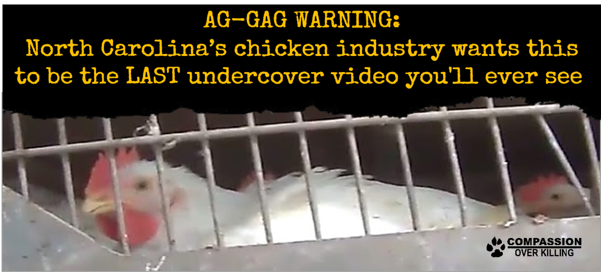 Watch & RT: COK's new undercover video that the meat industry doesn't want you to see: http://t.co/gWvQffm07s http://t.co/kmKJsfTHMJ
