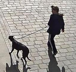 CCTV images released after dog is stolen from outside a #Derby bank. http://t.co/ec50WL6Q0B http://t.co/0i8t39Oo45