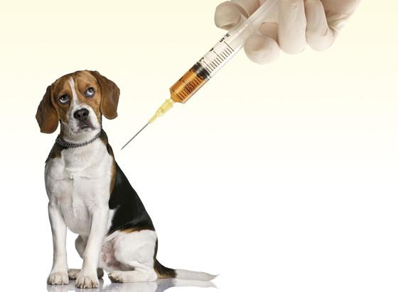 Tens of Thousands of Dogs are Still Used in Laboratory Testing Every Year http://t.co/33hJWSsg7F http://t.co/UWtsyfelkj