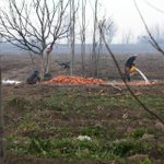 Farmers rinsing the soil from a fresh harvest of brilliant carrots in #Afghanistan, some of the sweetest on earth. http://t.co/QuHwGpG59Z
