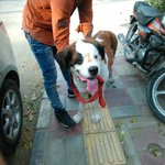 Two-year-old St Bernard urgently needs a home in Delhi as her family is abandoning her :( Please call +91 8743974807. http://t.co/Jv0BajVaFL