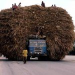 Seems the harvest war bigger than expected http://t.co/E1BB8ygb1J via @Mzee_Kahiu