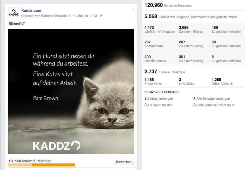 Cat Content in einer Community mit knapp 2'000 Fans. Like. http://t.co/cjPUJJcISS