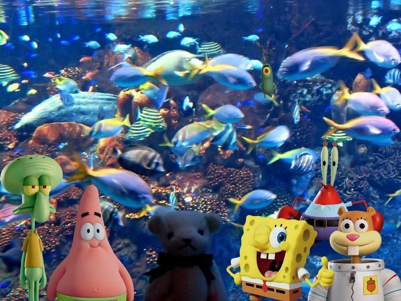 ボブ!ボブ!ボブ! #スポンジボブ #SpongeBob http://t.co/atTt0RYRnz