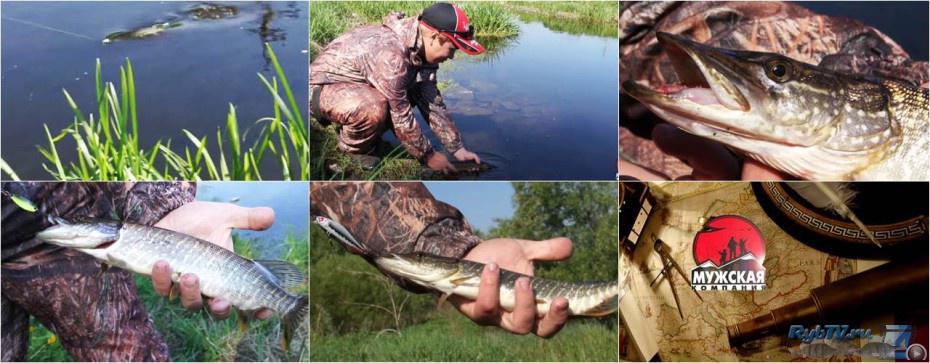 видео отчет о рыбалке на щуку