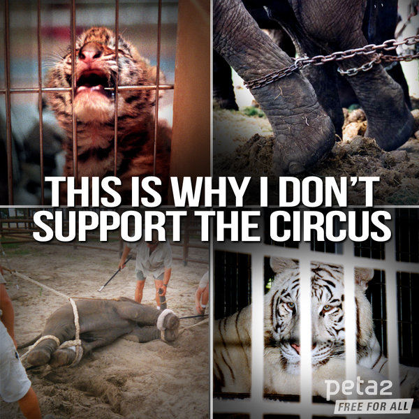 #Mexico BANNED the use of wild animals in #circuses.