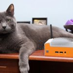 .@AndrewWrites' cat really wanted to be a part of this mini PC review http://t.co/j2zkNPiS4I http://t.co/A36uJkVhHR
