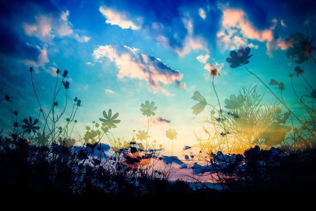 人間たちだけじゃない 動物も植物もすべて、この大自然も含めて みんな神さんのつくられた子どもたちです。 みんなで幸せになろうって、おいは思うちょりました。 この大自然の中で、みんなで幸せに生きたいと 願うちょりました。 (西郷隆盛) http://t.co/MSX8aArHFT