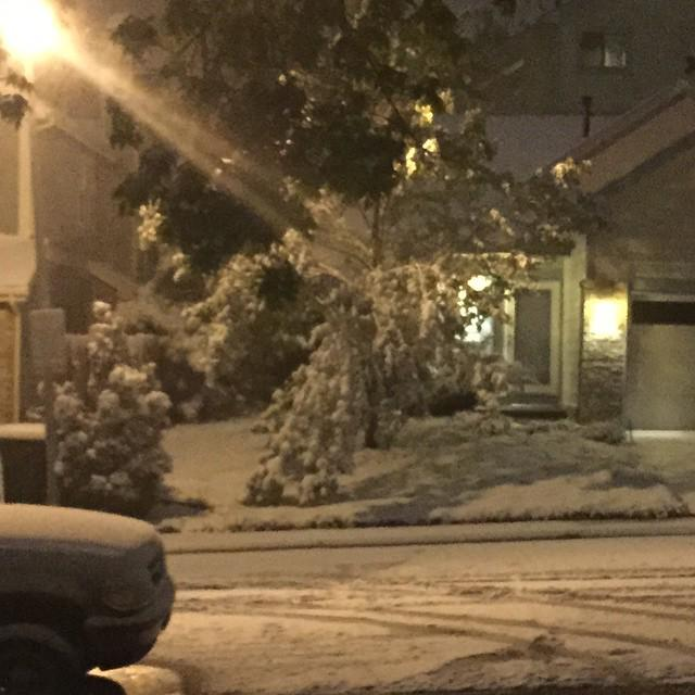Neighbor's tree is touching the ground due to the weight of the #snow. #9WX  #Westminster … http://t.co/tunsVAly3J http://t.co/rqn6xxnVlQ