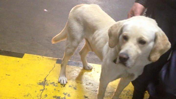 #AyudemosABruno y a todos los perros que están en pésimas condiciones x esta empresa https://t.co/XKwlGUJzBp  RT xfa! http://t.co/g6J6JHJJPU