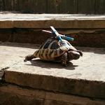 Hero in a half shell http://t.co/ZrJfoW5zgN